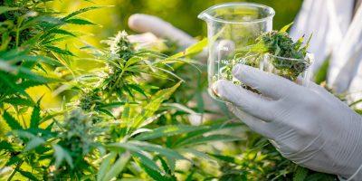 Global Medical Marijuana to Reach $55 Billion by 2025