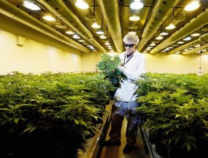 FIVE of the Largest & Most Important Marijuana Companies in the World, CBD Medical Journal